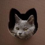 funny-cat-wallpaper