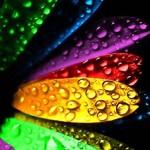 rainbow_petals